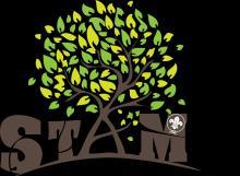 De stam